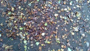 foglie secche